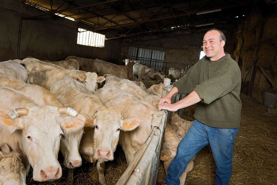 DOMINIQUE, éleveur de vaches charolaises « Je survis. Je veux montrer ma colère par un vote contestataire. » Il prévient : ce ne sera pas Mélenchon.