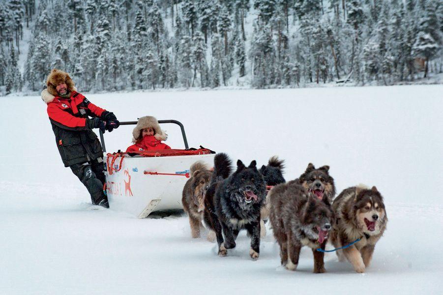 Ségolène Royal à bord du traîneau. Robustes et puissants, les chiens de Taïmyr sont d'une race primitive en voie d'extinction.