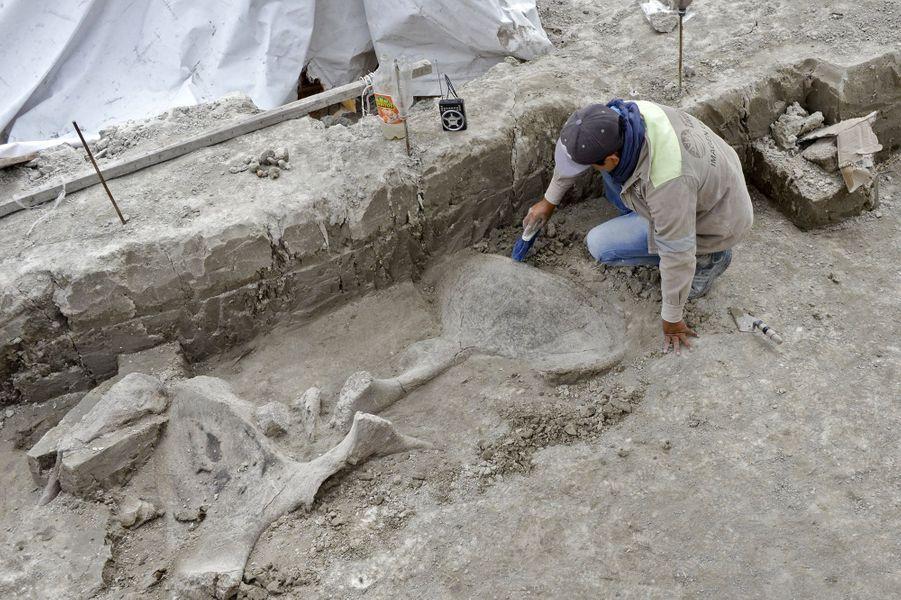 Les paléontologues estiment qu'au moins cinq troupeaux de mammouths vivaient il y a 14 000 ans dans le centre du Mexique, oùhabitaient aussi des hommes, des bisons et d'autres animaux.