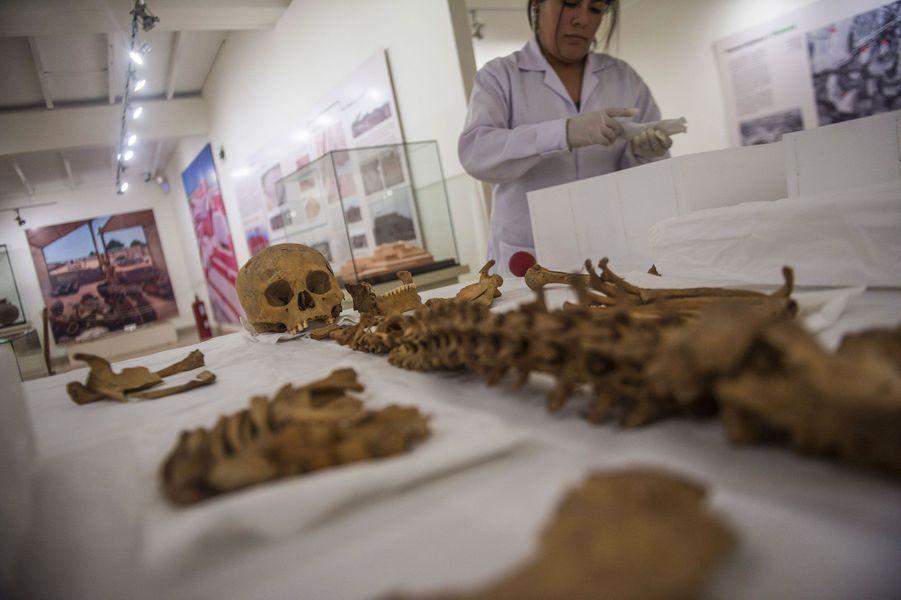 Les ossements des autres chiens et le crâne humain