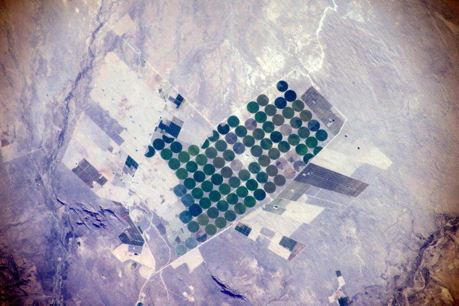 Des champs irrigués péruviens