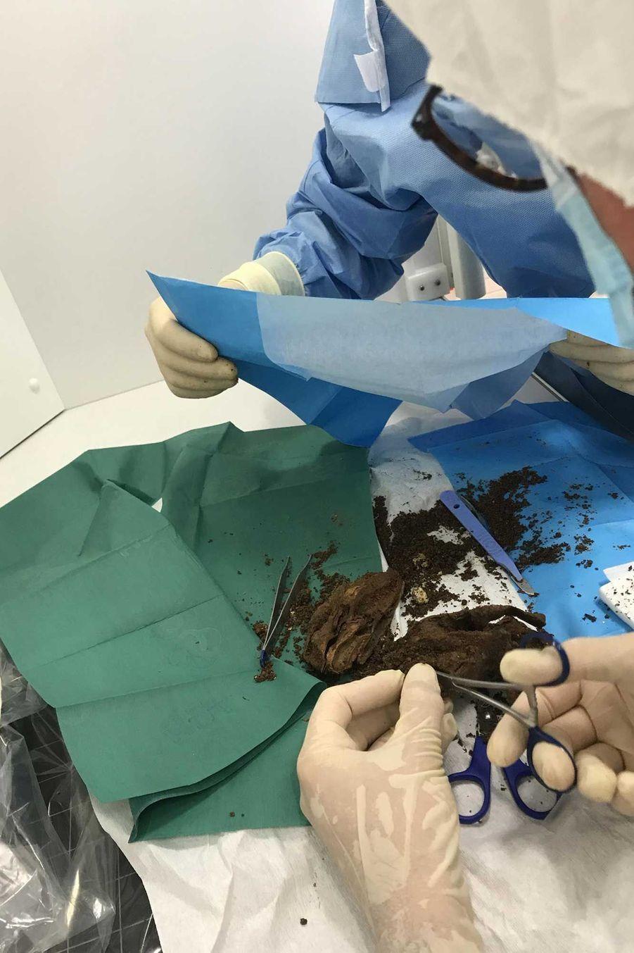 Autopsie du cœur sous atmosphère stérile.