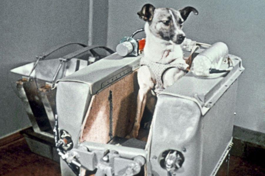 Laïka, quelques minutes avant le décollage, le 3 novembre 1957.