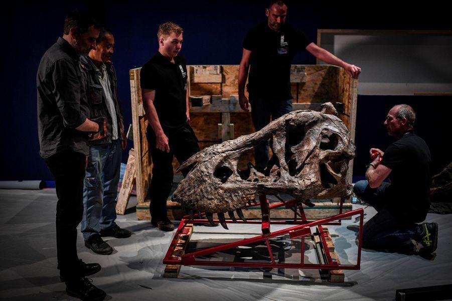 """Le T-Rex """"Trix"""" sera exposé du 6 juin au 2 septembre 2018 au Jardin des Plantes de Paris."""