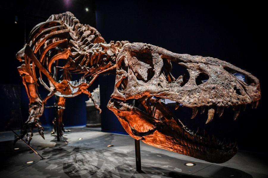 Le squelette de Trix sera exposé du 6 juin au 2 septembre, dans le Jardin des Plantes de Paris.