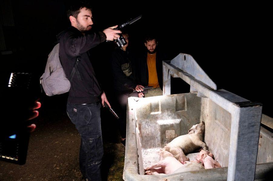 Dans la poubelle, à l'extérieur de la ferme, les animaux morts sont entassés sans aucune précaution.