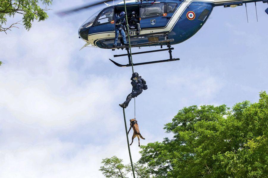 Acrobatique Lionel, membre du GIGN, et son chien Graff, lors d'un exercice en région parisienne.