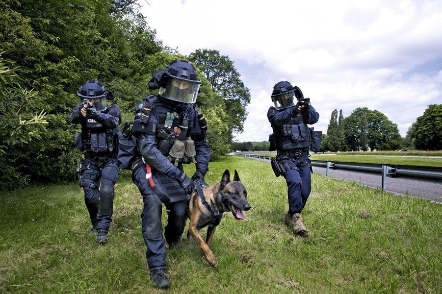 Discipliné, efficace, équilibré, le berger belge malinois est la race la plus prisée des forces antiterroristes françaises. Ici, Plume, chien d'assaut.