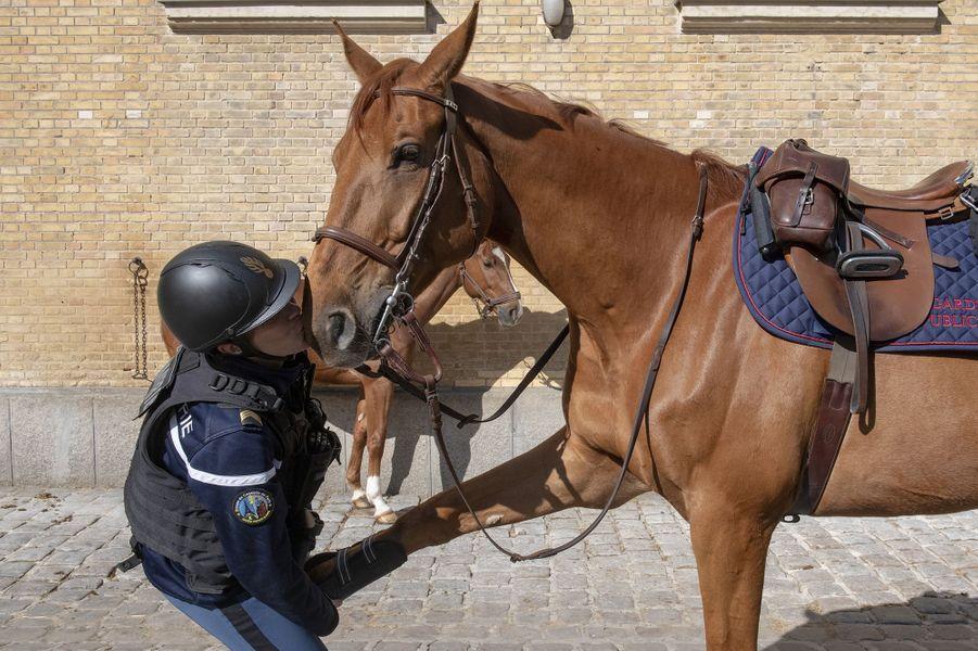 Un gendarme de la caserne des Célestins donne un baiser à son cheval le 15 mai 2020. Le cavalier et le cheval forment un couple indissociable.