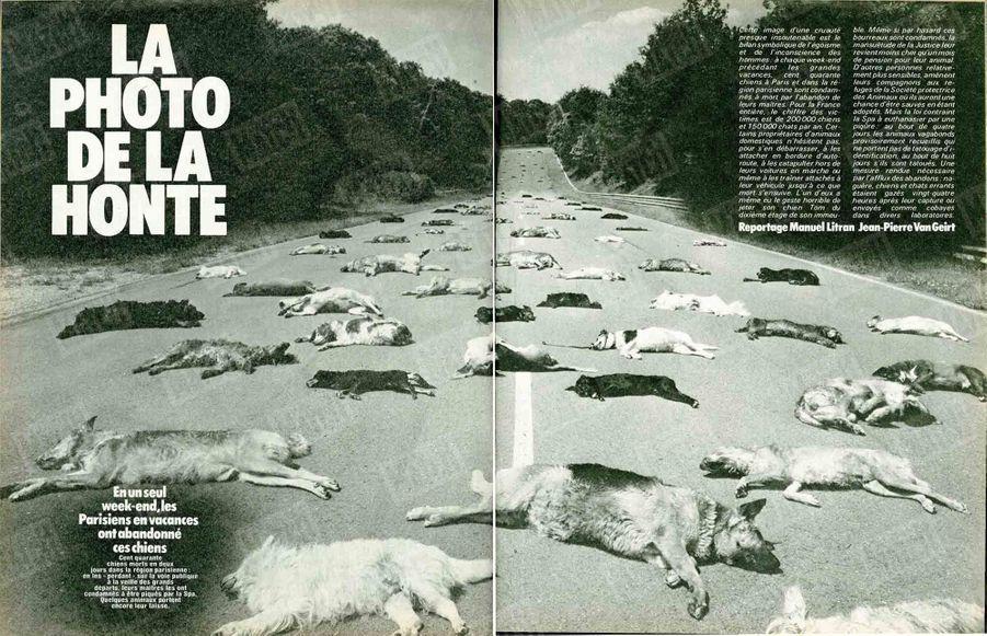 """«Cent quarante chiens morts en deux jours dans la région parisienne : en les """"perdant"""" sur la voie publique à la veille des grands départs, leur maîtres les ont condamnés à être piqués par la SPA. Quelques animaux ont encore leur laisse.»(Paris Match n°1625, 18 juillet 1980)"""