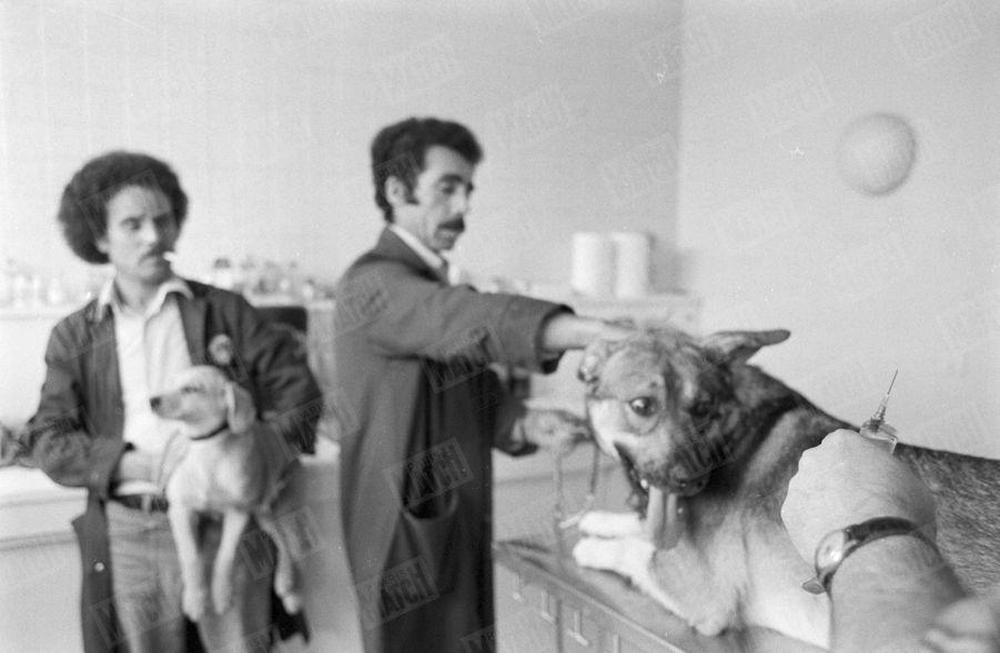 «Dans le regard de ce berger, toute l'angoisse d'un animal qui sent la mort. Il ne souffrira pas, la piqûre intraveineuse agit en deux secondes.»(Paris Match n°1625, 18 juillet 1980)