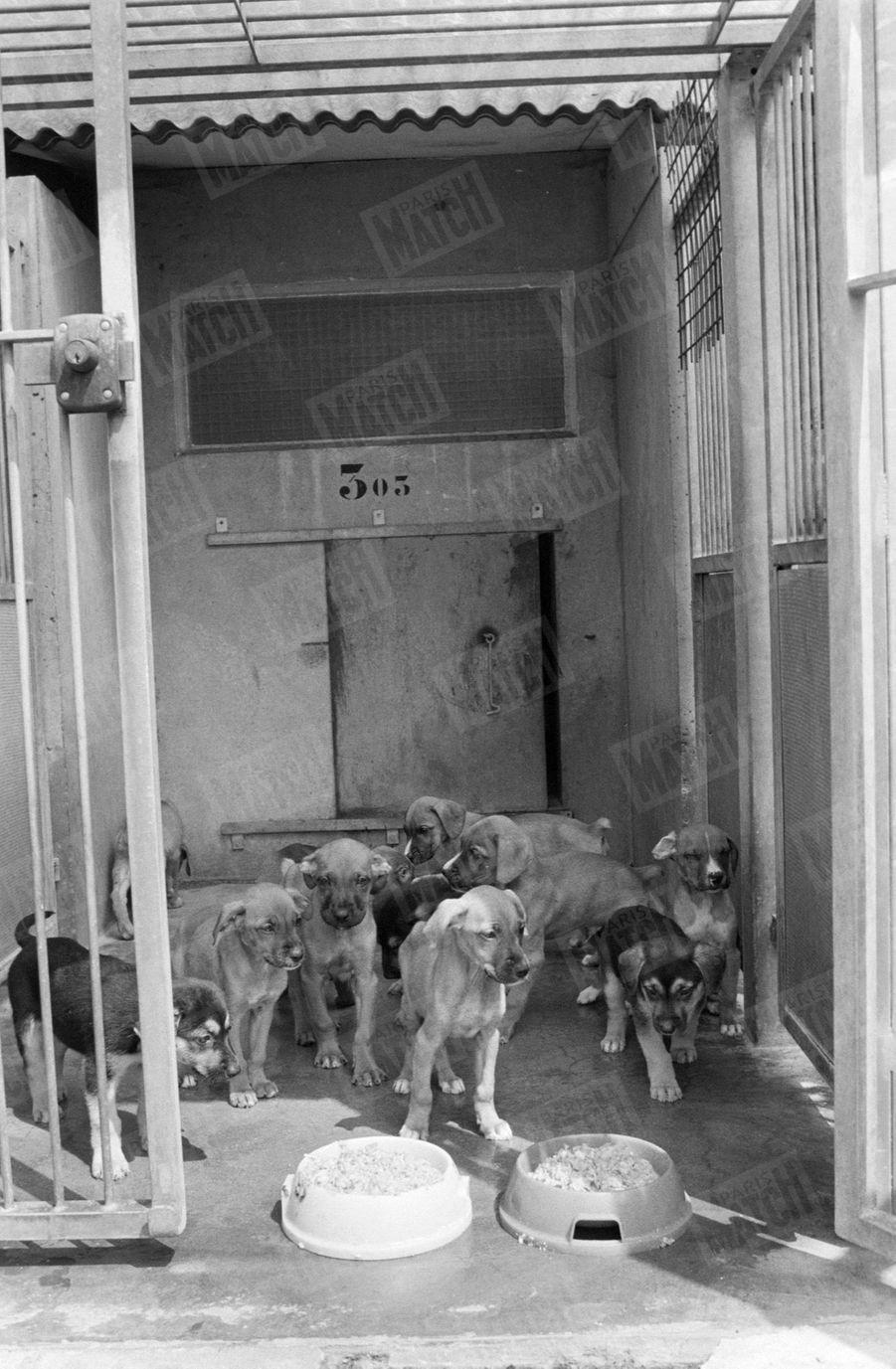 Des chiens en attente d'adoption.