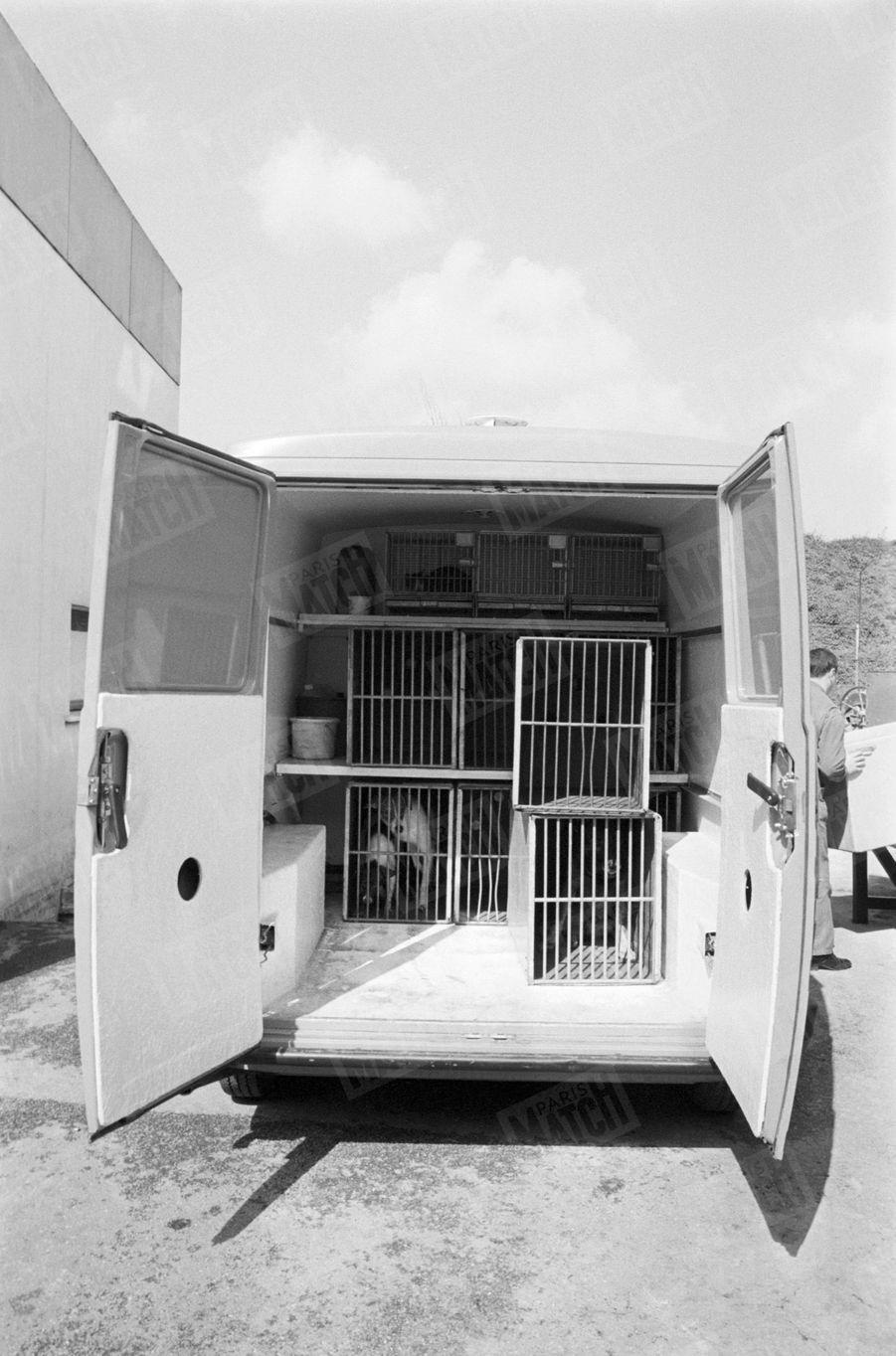 La camionnette qui recueille les chiens errants, avec des cages à l'intérieur.