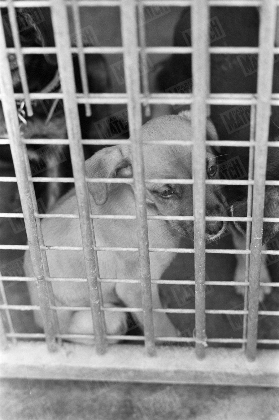 Un chiot à adopter, au refuge SPA Grammont de Gennevilliers.