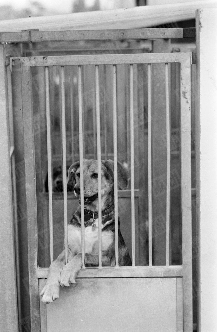 Un chien à adopter, au refuge SPA Grammont de Gennevilliers.