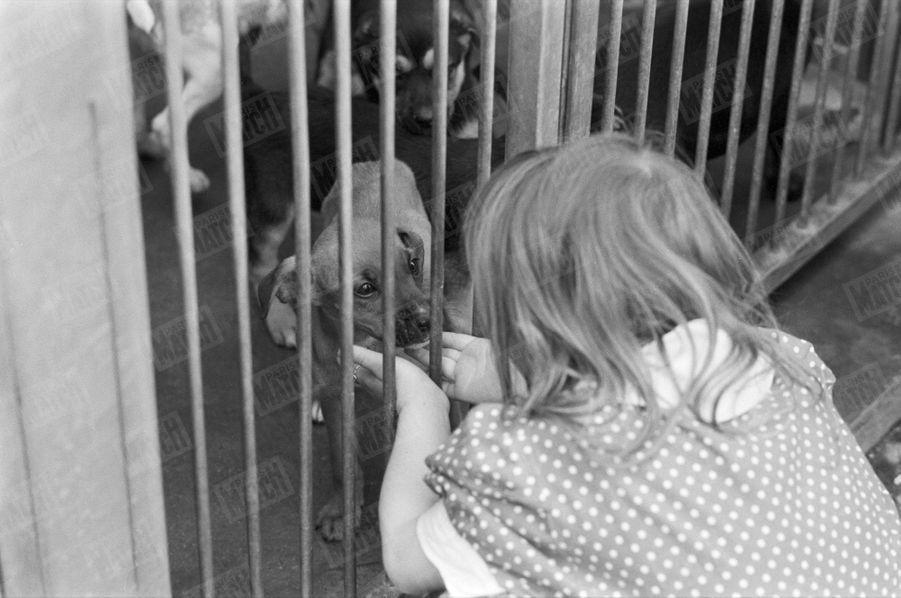 Une petite fille caresse un chien à travers la grille de la cage.