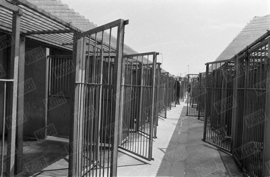 Les cages du refuge SPA Grammont de Gennevilliers, en 1980.