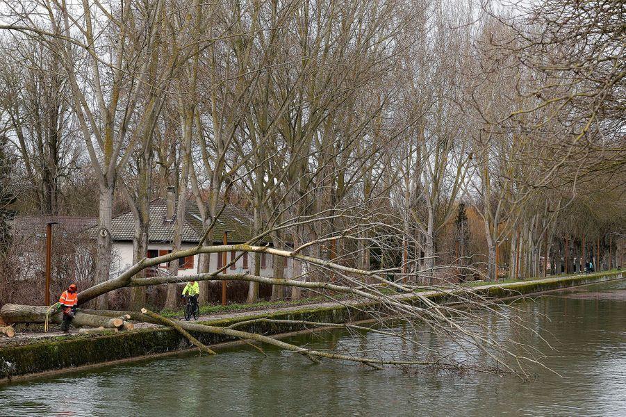 Chute d'un arbre à Reims, dans la Marne.