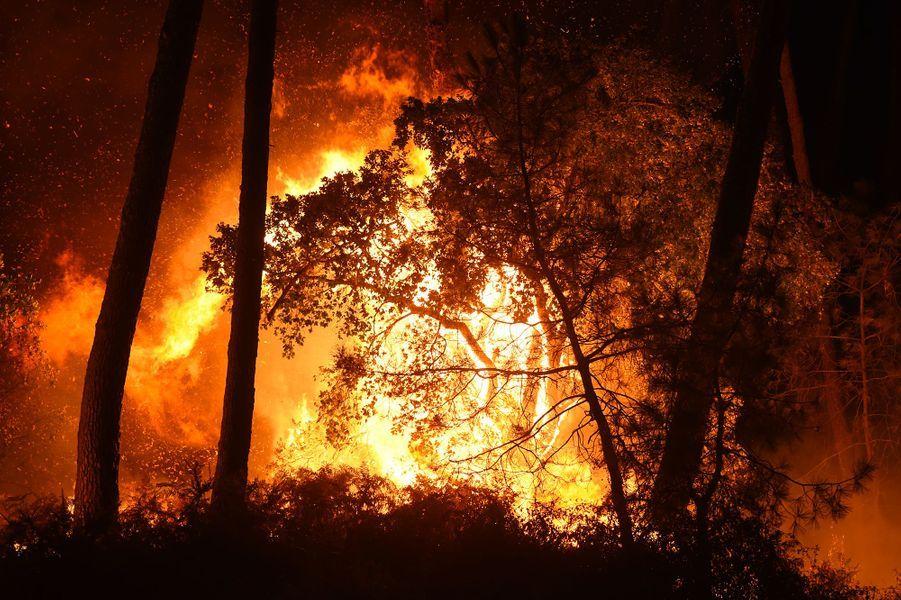L'incendiedans la forêt de Chiberta, en plein centre d'Anglet, a ravagé jeudi soir environ 100 hectares