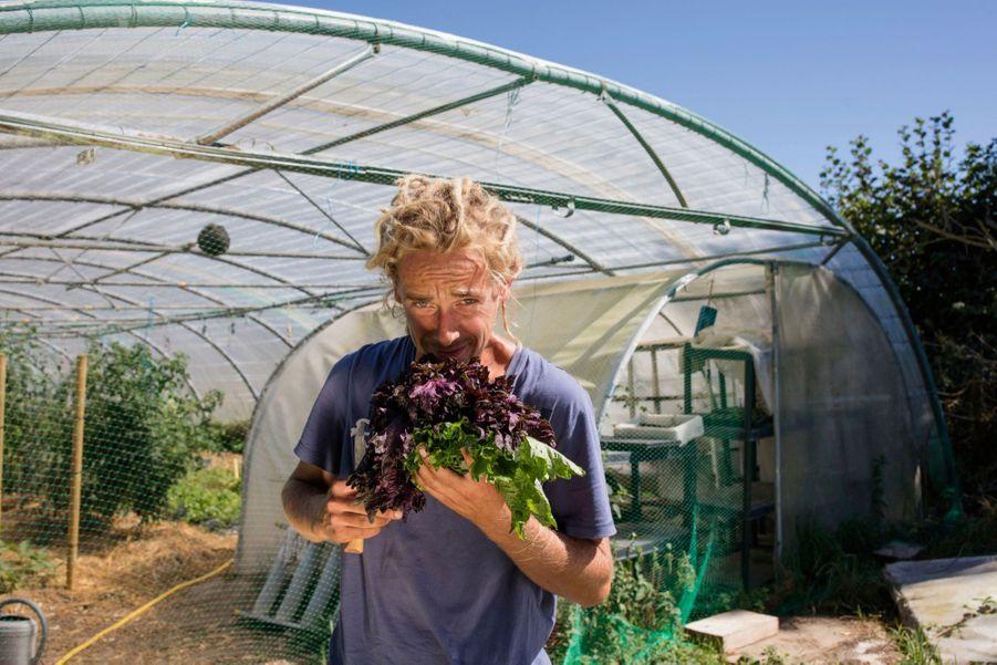 Edouard, son compagnon, récolte du shiso pourpre et vert, des aromates japonais.