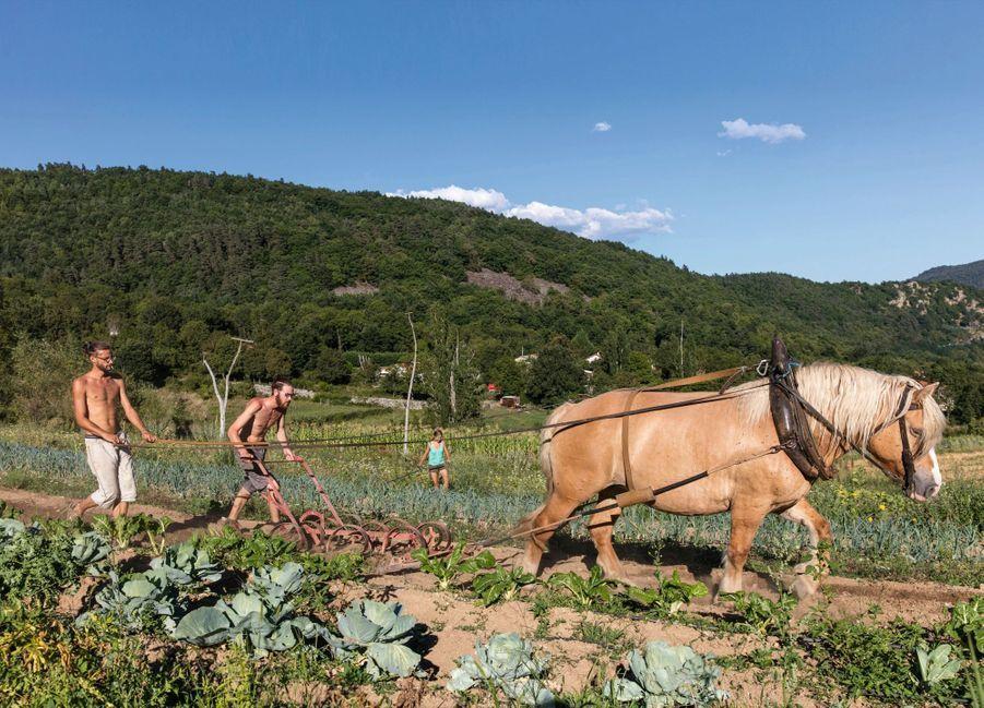 Entre bettes et poireaux, labourage à la ferme de Flaceleyre, en Haute-Loire : Michael dirige la jument, Edouard manie la charrue et Suzanne la faux.
