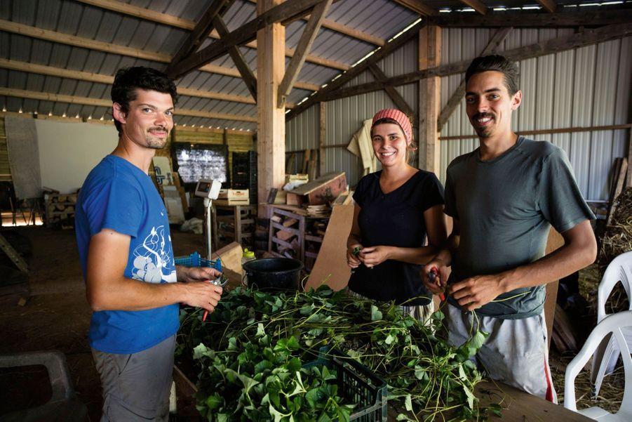 Erwan, Léonie et Florian, « wwoofeurs » à la ferme de la Mare des Rufaux : contre le gîte et le couvert, ils travaillent quelques heures.