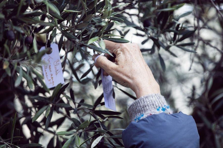 Une personne dépose un mot dans l'olivier symbole d'hommage aux victimes des attentats.