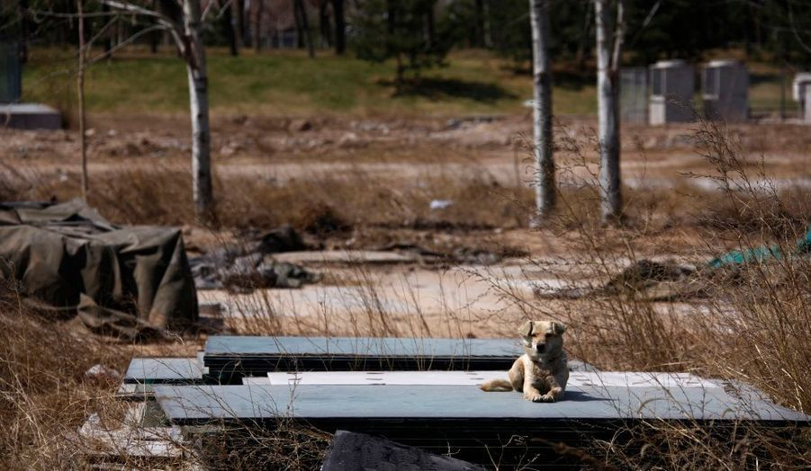 Un chien, sur l'ancien terrain de baseball.