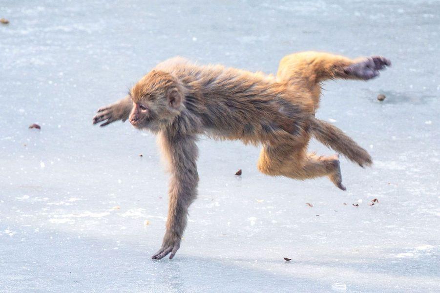 Des macaques s'amusent sur la glace, le 30 janvier 2018 à Nanjing en Chine