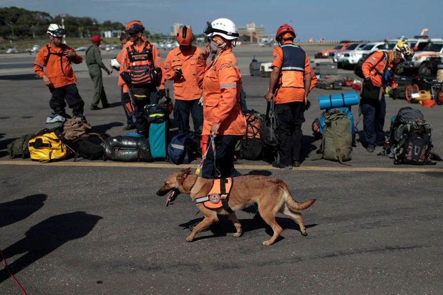 Frida et les chiens secouristes, héros de Mexico.