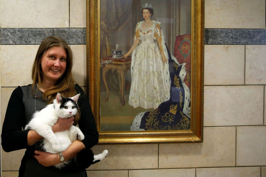 Lawrence of Abdoun, le chat de l'ambassade britannique d'Amman, en Jordanie.