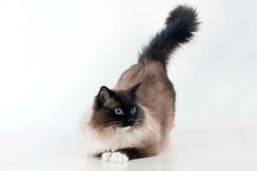 Le chat est un compagnon de vie pour l'être humain.