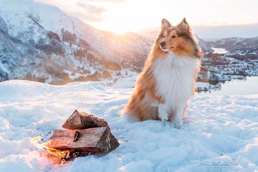 Les 50 plus beaux chiens du monde en photos - Les plus beaux plafonds du monde ...