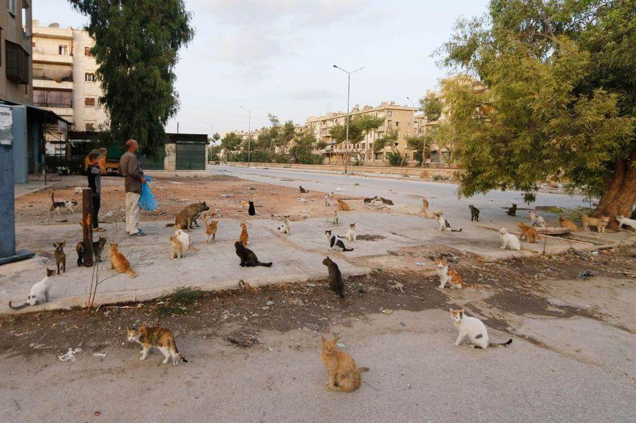 Alaa s'occupe des chats d'Alep dans un sanctuaire malgré la guerre