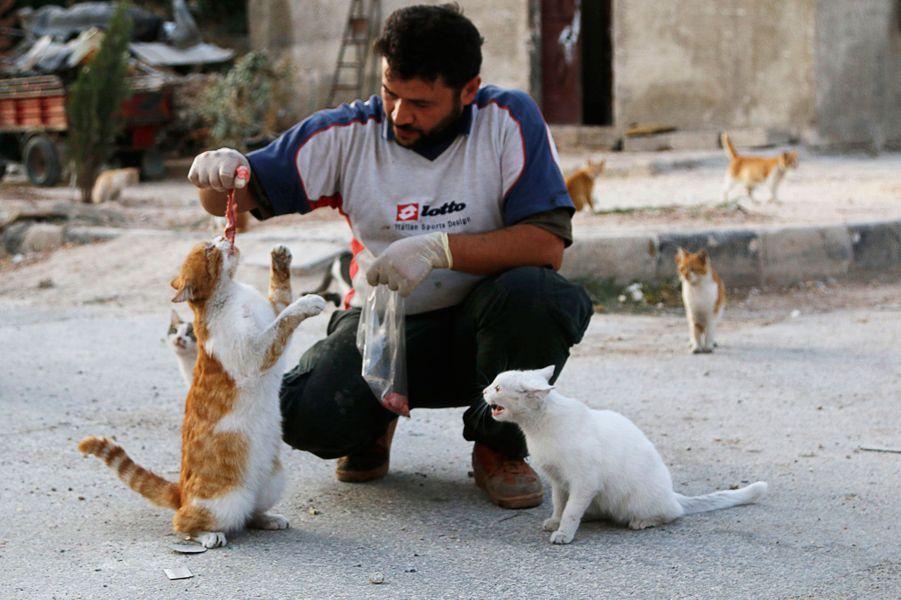 Alaa s'occupe des chats d'Alep dans un sanctuaire