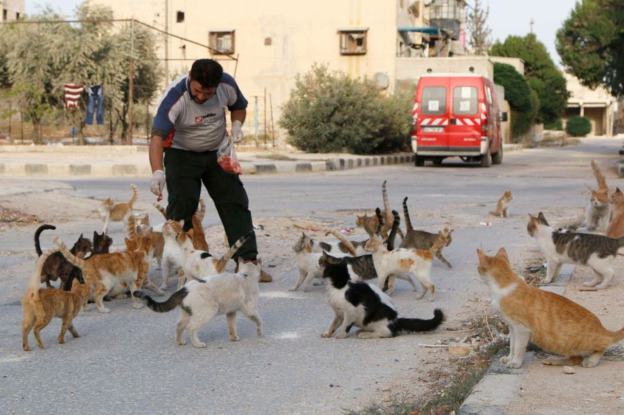Alaa s'occupe des chats d'Alep en Syrie