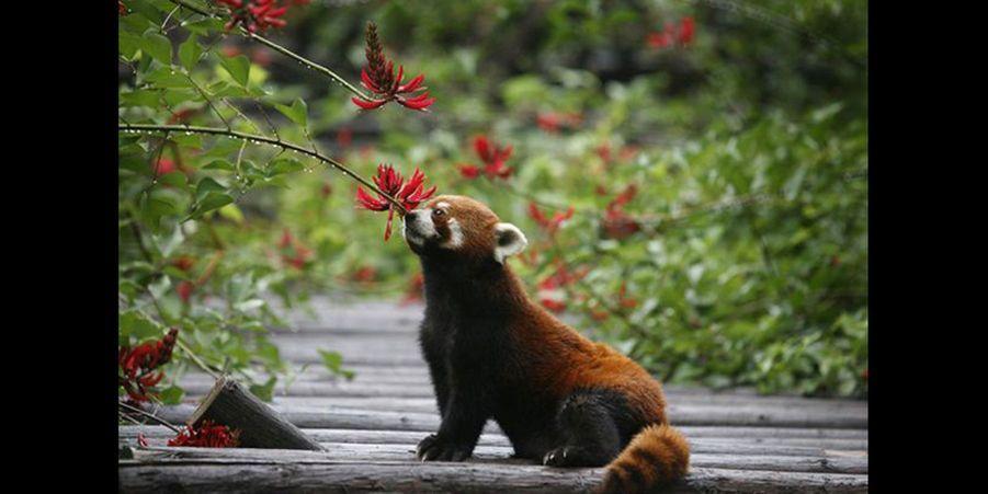 Le petit animal a été attiré par les douces effluves de cette jolie fleur. (voir l'épingle)Suivez nous surPinterest!