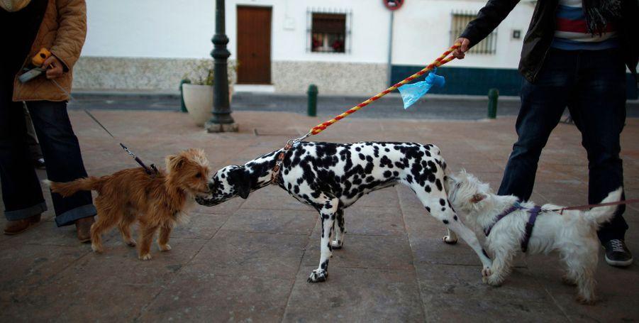 Bénédiction des animaux à Churriana, en Espagne, le 17 janvier