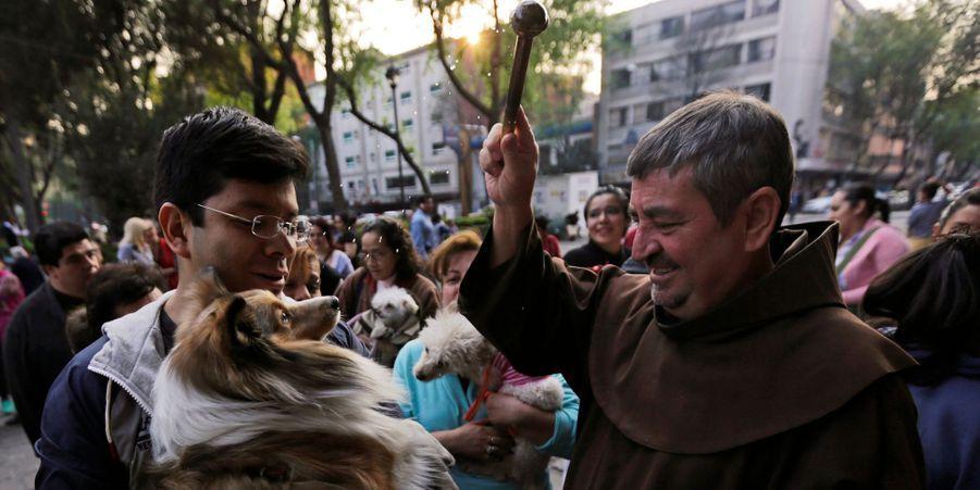 Bénédiction des animaux à Mexico, le 17 janvier