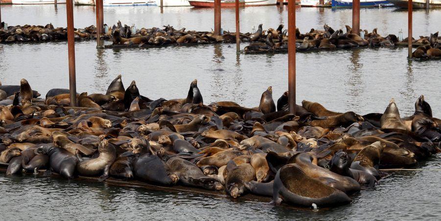 Des lions de mer couchés dans l'Oregon