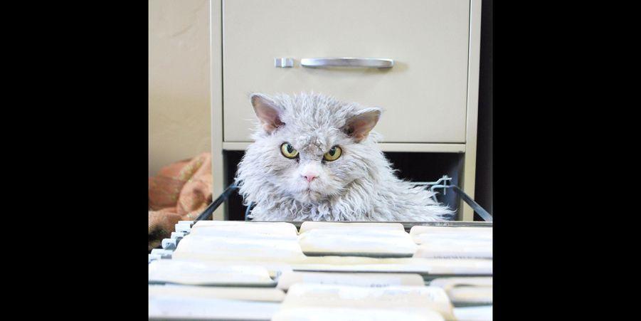 Albert, le chat perpétuellement en colère