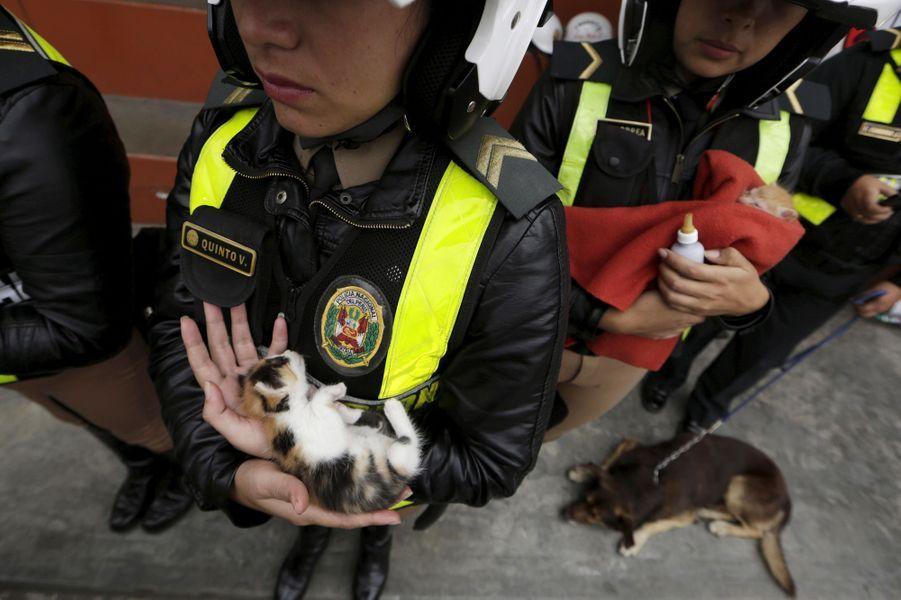 Les policiers péruviens viennent en aide aux animaux errants