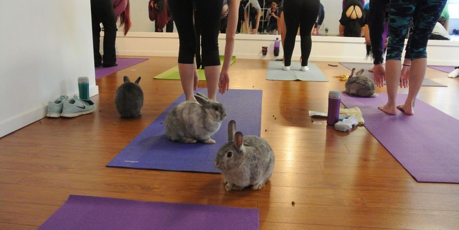 Cours de yoga avec lapins, au Sunberry Fitness de Richmond, au Canada