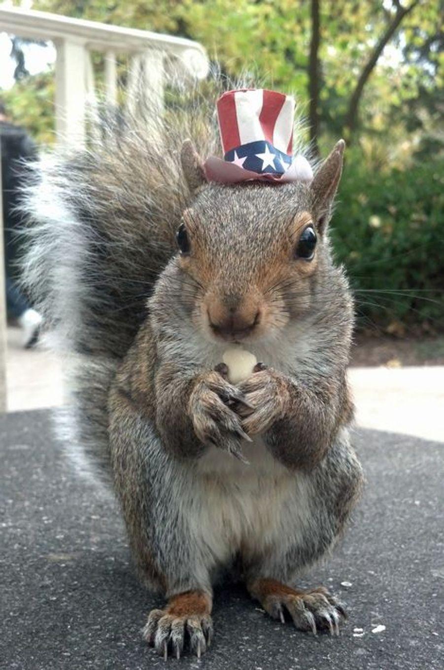 Drôle de rentrée pour Sneezy l'écureuil déguisé