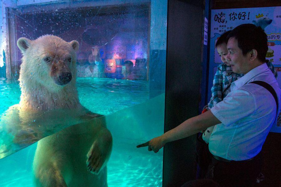 Pizza, est l'ours polaire le plus triste du monde