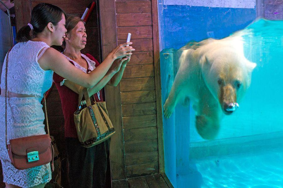 Pizza, ours polaire captif dans un centre commercial de Guangzhou en Chine