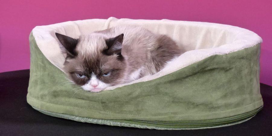 Grumpy Cat découvre son double de cire chez Madame Tussauds à San Francisco