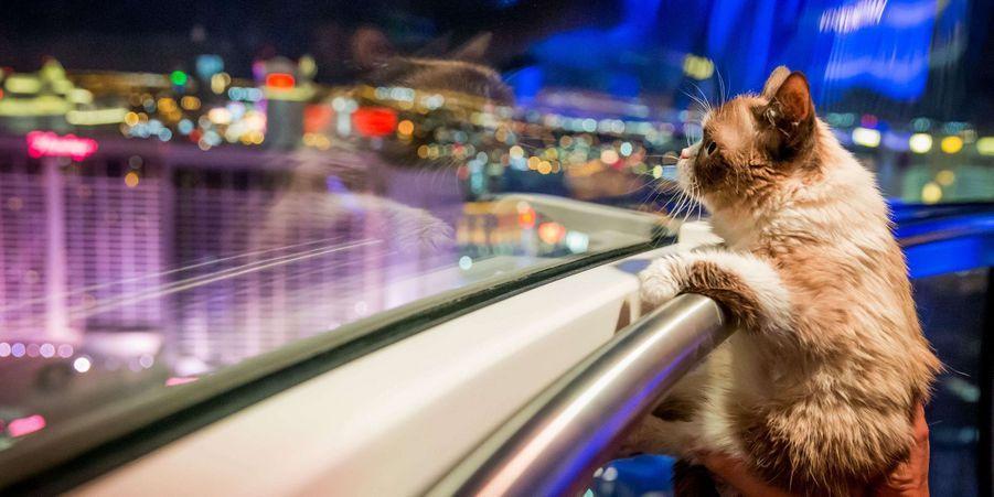 Grumpy Cat à Las Vegas, en août 2014