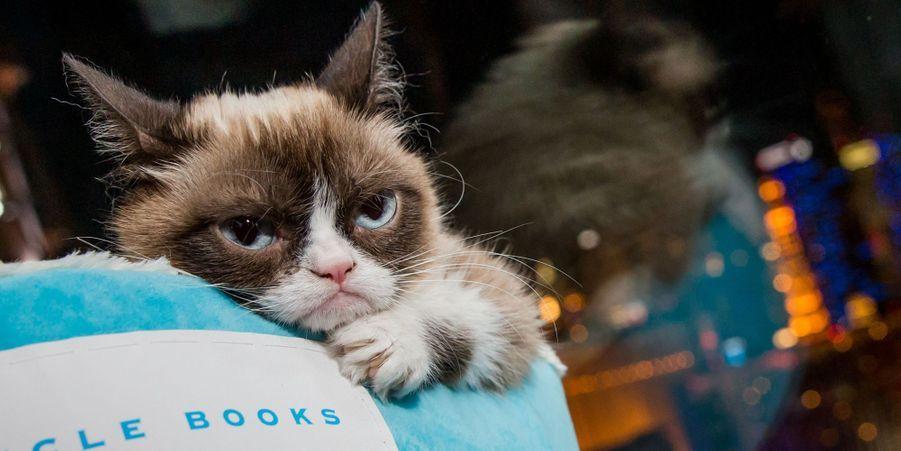 Grumpy Cat a rapporté près de 100 millions de dollars à sa propriétaire