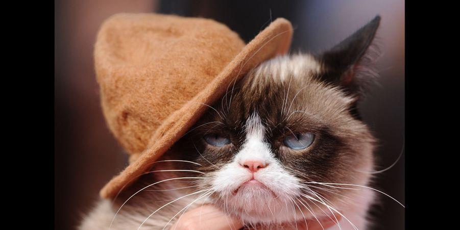 Grumpy Cat aux MTV Movie Awards, en août 2014